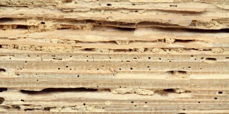 Holzschaden durch Holzwurm