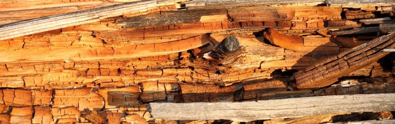 Holzschutz gegen Bläue und Fäulnis