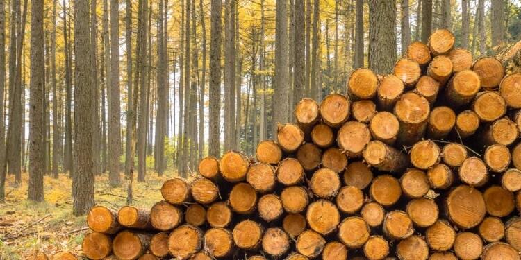 Lärchenholz Zaun streichen