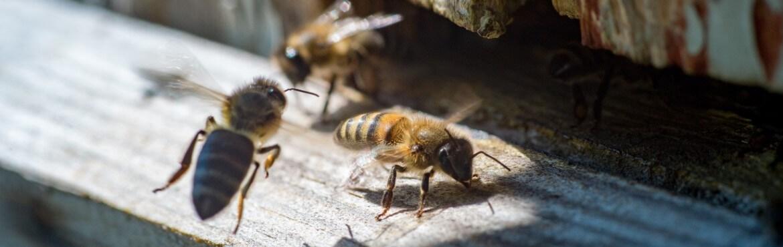 Holzschutz gegen Wespen